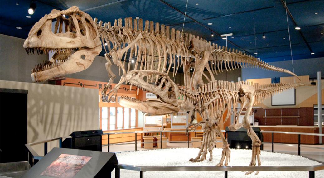 名古屋市科学館のマプサウルス